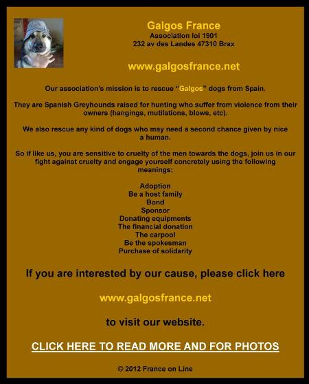 Galgos France, rescue dogs in France, adopt a dog rescue dog in France, Spain Glagos dogs rescue